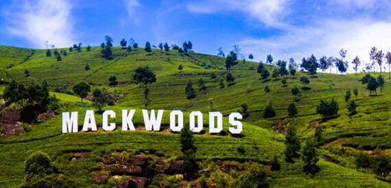 Mackwood tea factory